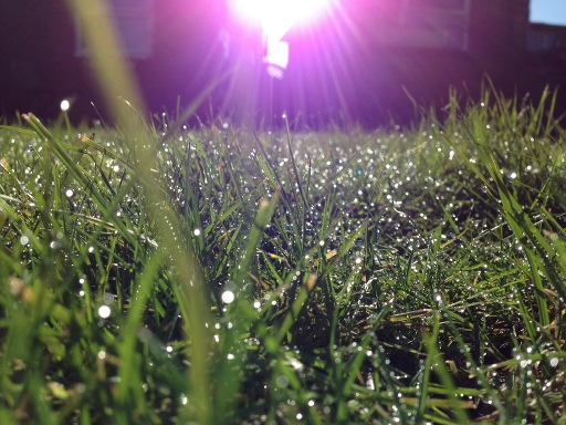 sunrise over grass with dew taken with iphone